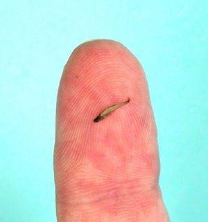 el animal mas pequeño del mundo