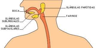 que es el sistema digestivo