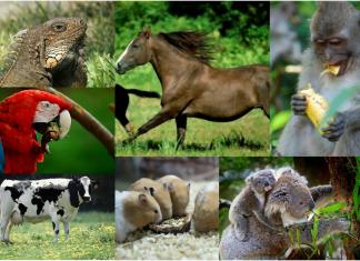 animales herviboros