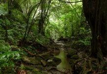 tipos de selva