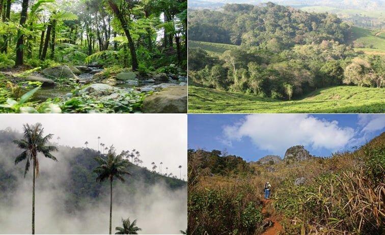 Resultado de imagen para ecosistema de colombia