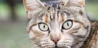 como ven los gatos