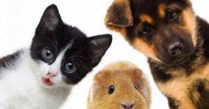 cuales son los animales domésticos