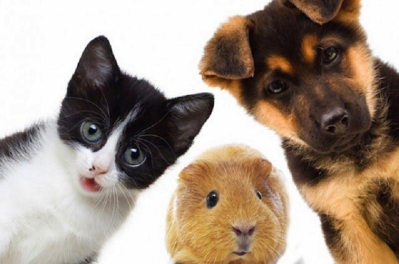 191 Cuales Son Los Animales Domesticos Ara Blog