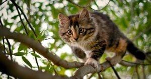 cuantas vidas tiene un gato