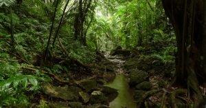 cuales son los tipos de selva