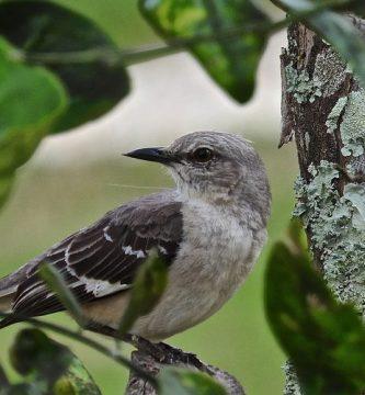 aves que cantan de noche