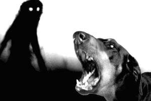 perro y fantasma