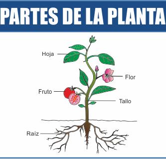 Elementos de una planta