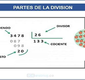 La división y sus partes