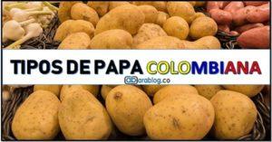 Cuantos tipos de papa hay en Colombia