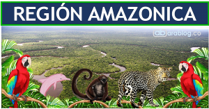 region amazonica de colombia
